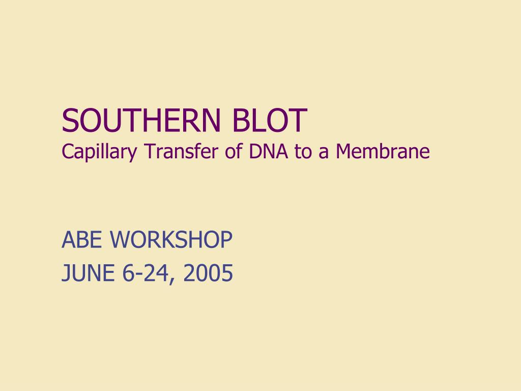 southern blot capillary transfer of dna to a membrane l.