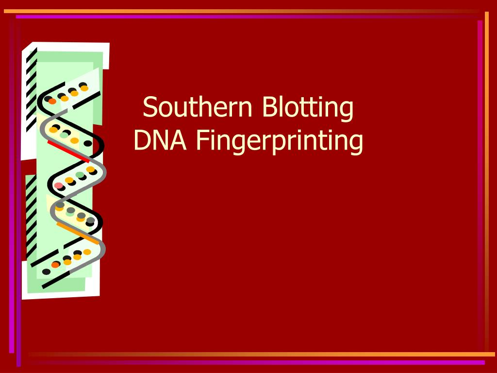 southern blotting dna fingerprinting l.