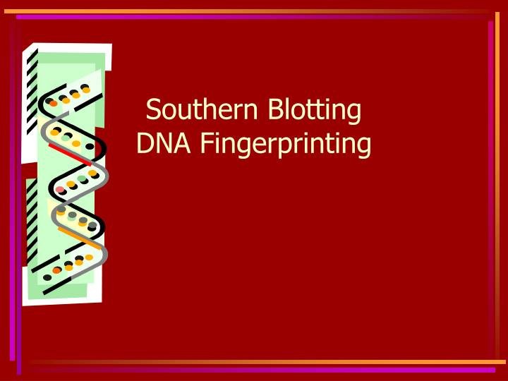 southern blotting dna fingerprinting n.