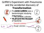 griffith s experiment with pneumonia and the accidental discovery of transformation