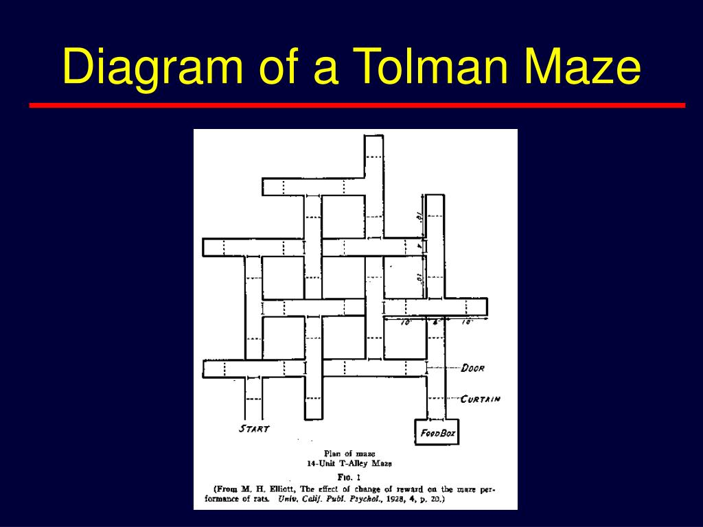 Diagram of a Tolman Maze