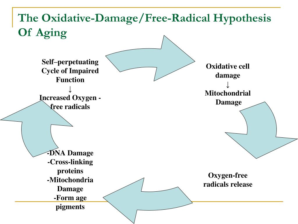 The Oxidative-Damage/Free-Radical Hypothesis Of Aging