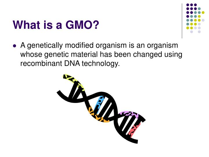 the impacts of genetically modified organisms Genetically modified (gm) foods are organisms that have had new genes added to themselves from other organisms being around since 1994, they are produced in a way that is very similar to genetic engineering.