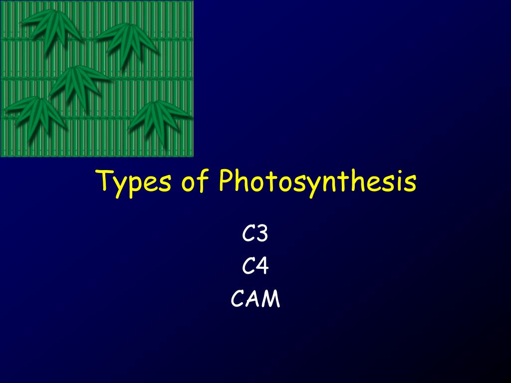 types of photosynthesis l.