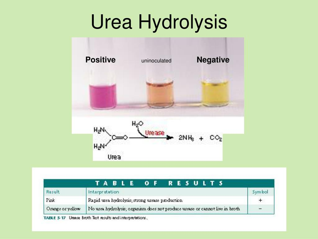 hydrolysis report This hydrolysis reaction will occur spontaneously at room temperature and the addition of acid only affects the amount of time it takes the items for lab report.
