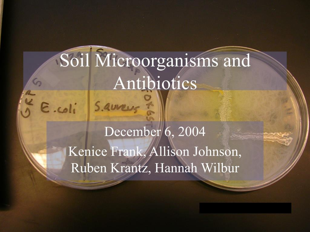 soil microorganisms and antibiotics l.