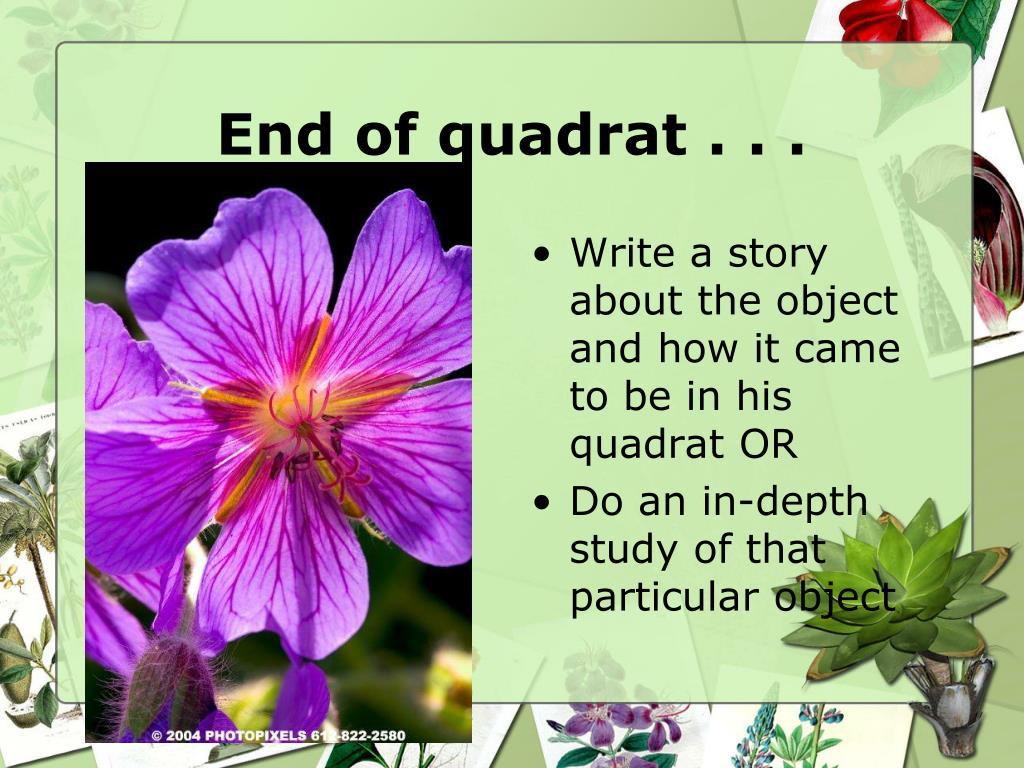 End of quadrat . . .