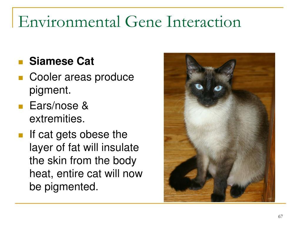 Environmental Gene Interaction