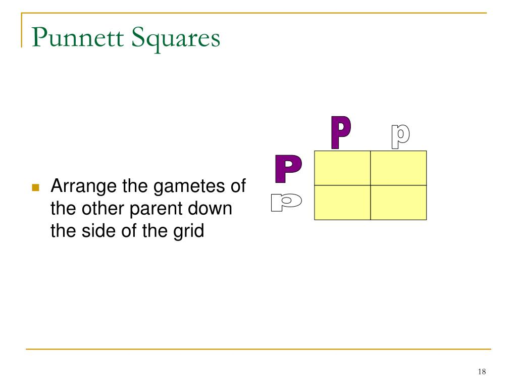 Arrange the gametes of the other parent down the side of the grid