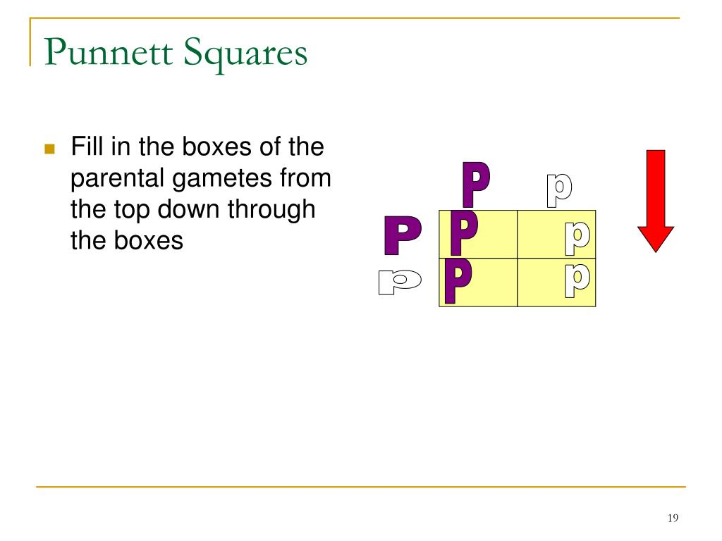 Fill in the boxes of the parental gametes from the top down through the boxes