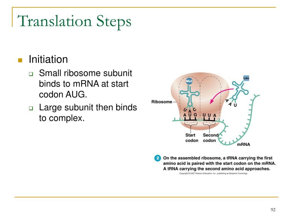 Translation Steps