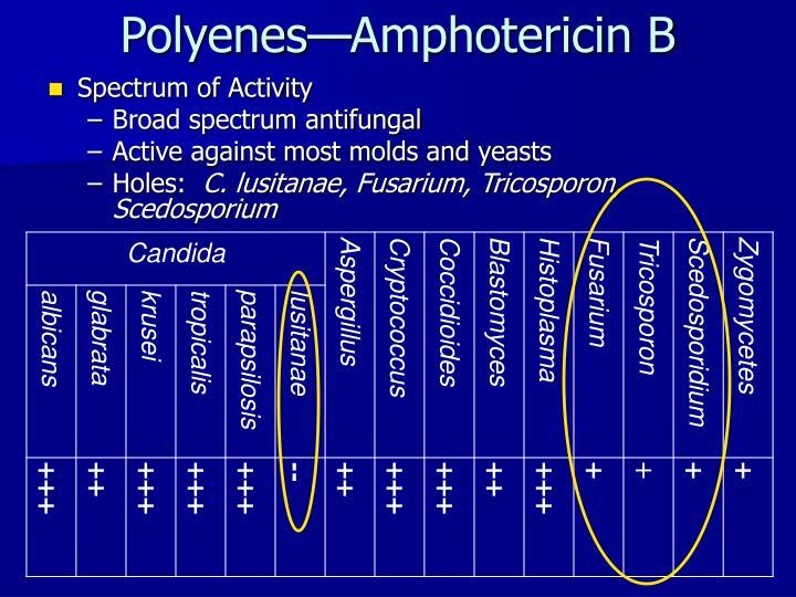 Polyenes amphotericin b3