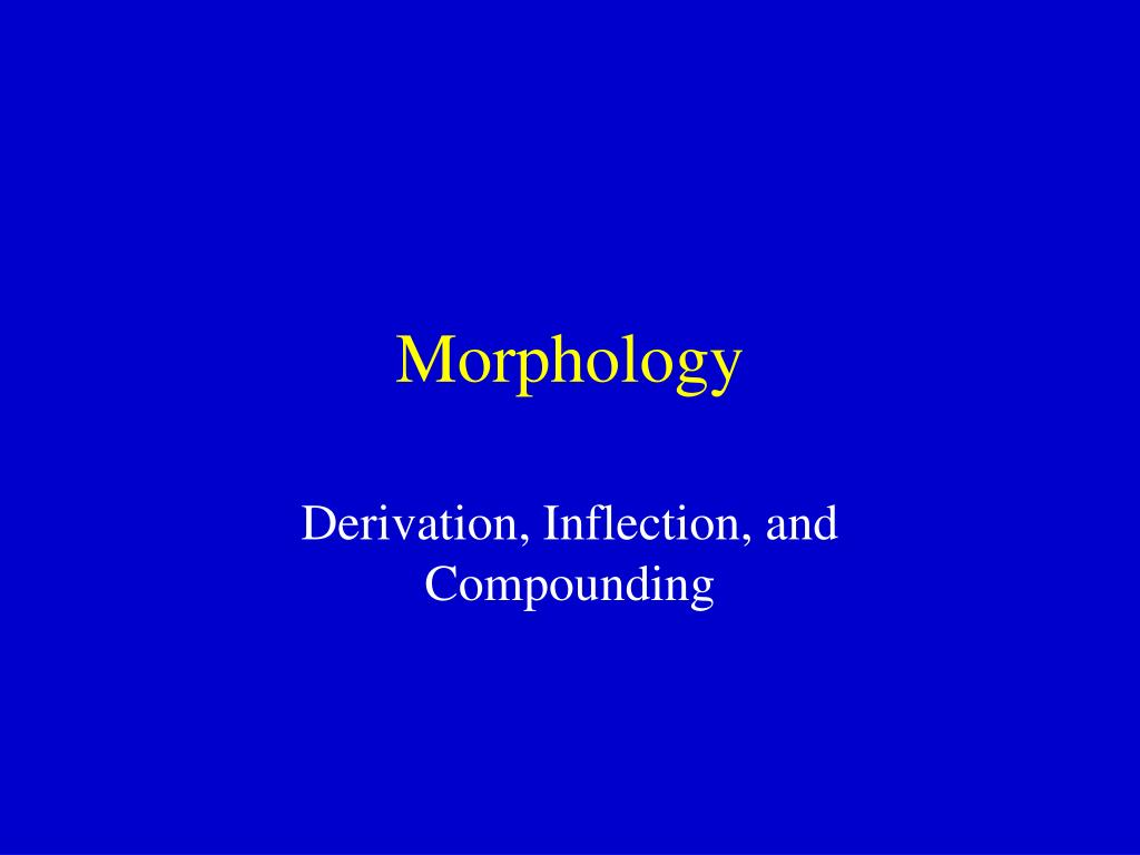 morphology l.