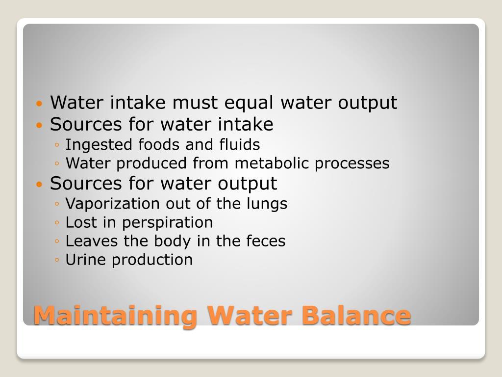 Water intake must equal water output