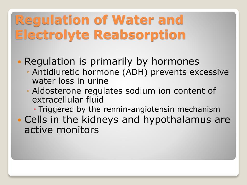 Regulation is primarily by hormones