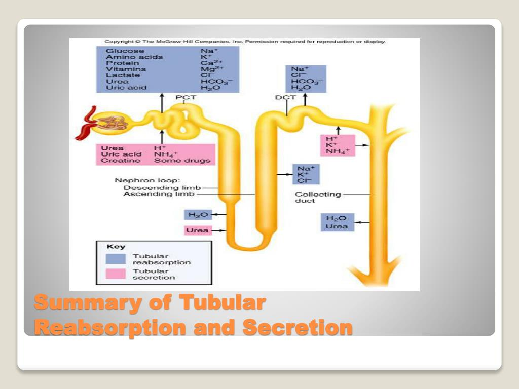 Summary of Tubular