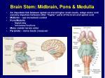 brain stem midbrain pons medulla