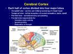 cerebral cortex24