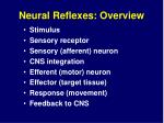 neural reflexes overview