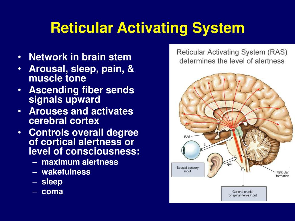 PPT - Neurophysiology PowerPoint Presentation, free ...