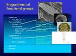 biogeochemical functional groups18
