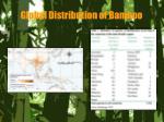 global distribution of bamboo5