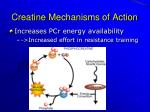 creatine mechanisms of action