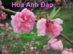 hoa anh o nh c ph m ai l n xu hoa d o ho ng nguy n ca si anh tuy t