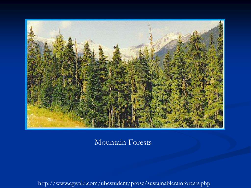 Mountain Forests