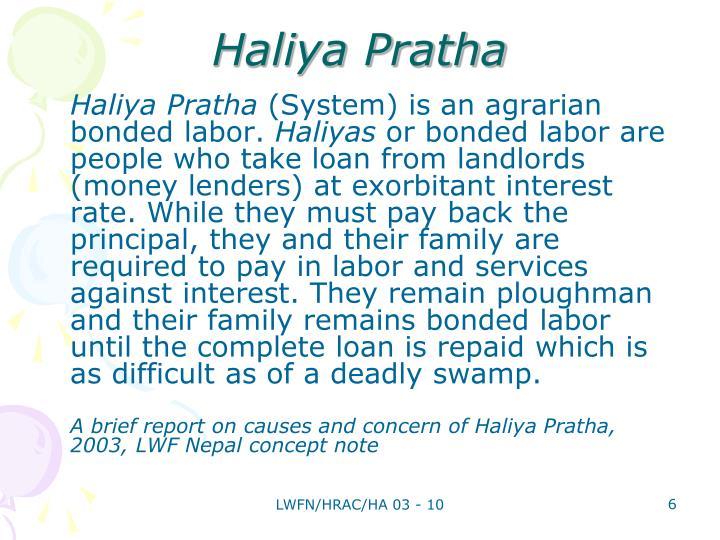 Haliya Pratha