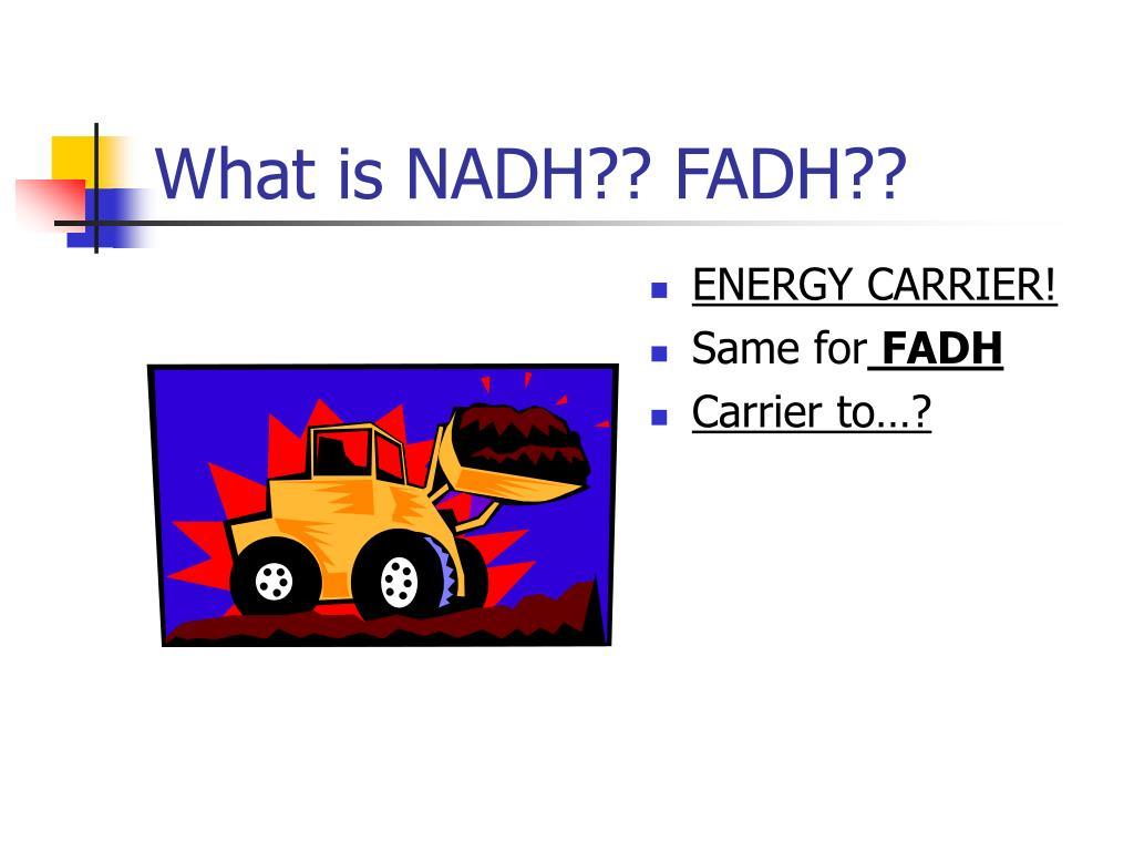 What is NADH?? FADH??