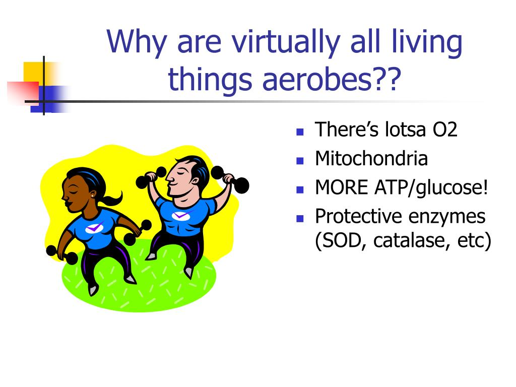 Why are virtually all living things aerobes??