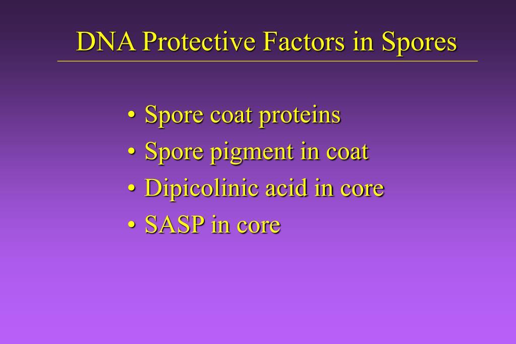DNA Protective Factors in Spores
