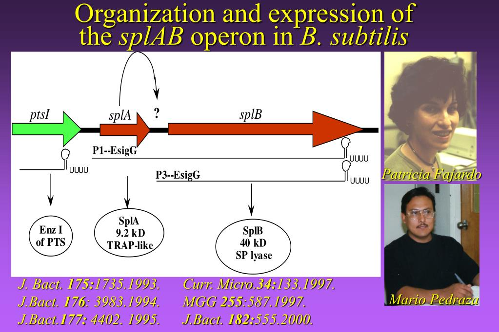 Organization and expression of the