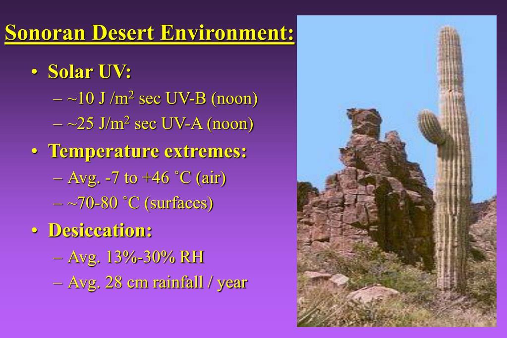 Sonoran Desert Environment: