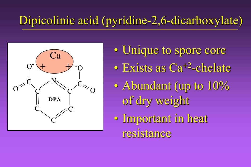 Dipicolinic acid (pyridine-2,6-dicarboxylate)