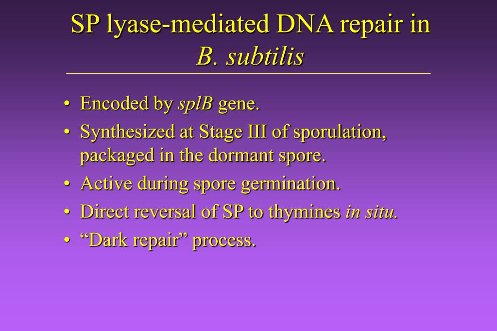 SP lyase-mediated DNA repair in