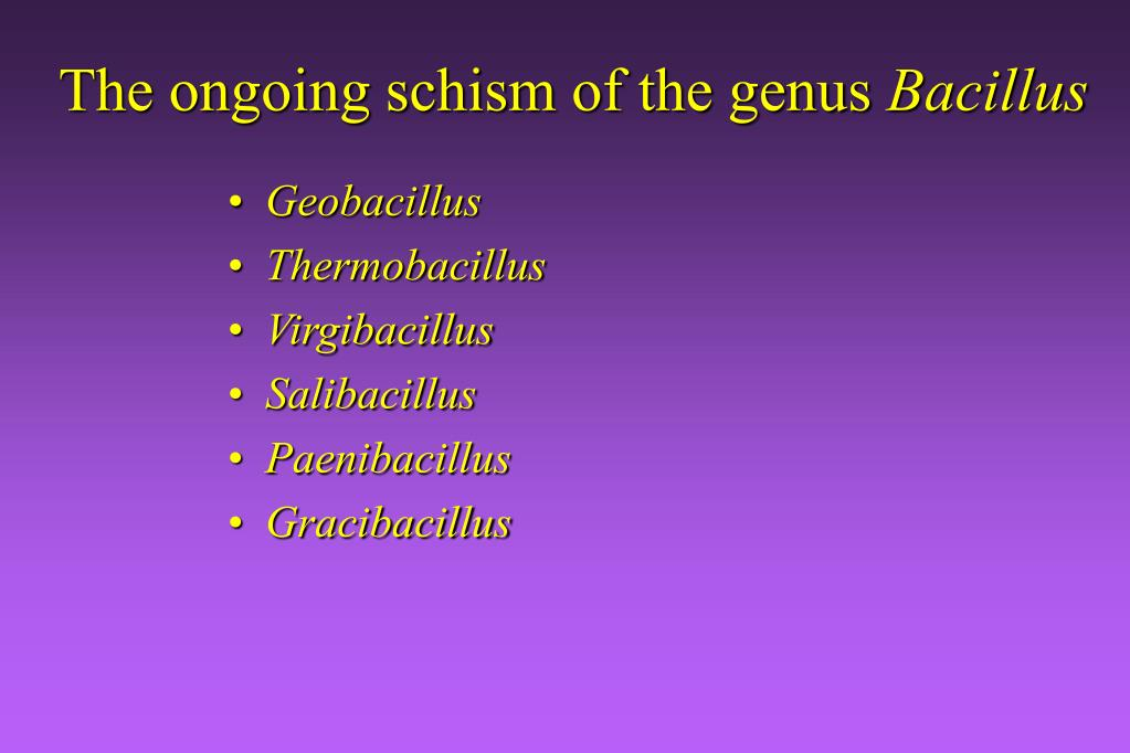 The ongoing schism of the genus