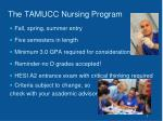 the tamucc nursing program