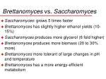 brettanomyces vs saccharomyces