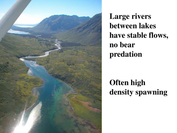 Large rivers between lakes have stable flows, no bear predation