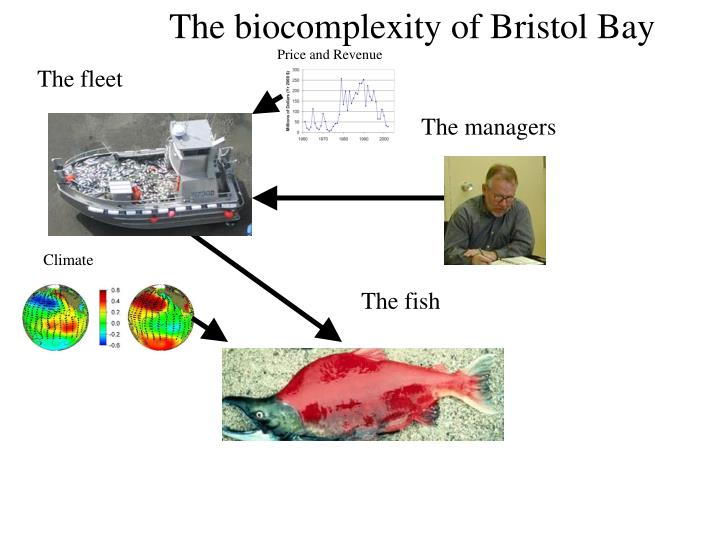 The biocomplexity of Bristol Bay