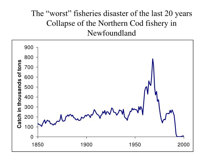 """The """"worst"""" fisheries disaster of the last 20 years"""