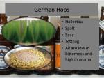 german hops21