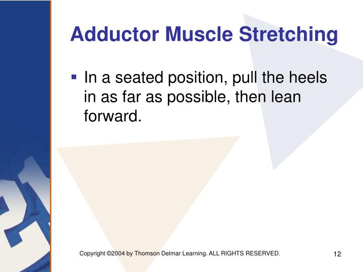 Adductor Muscle Stretching