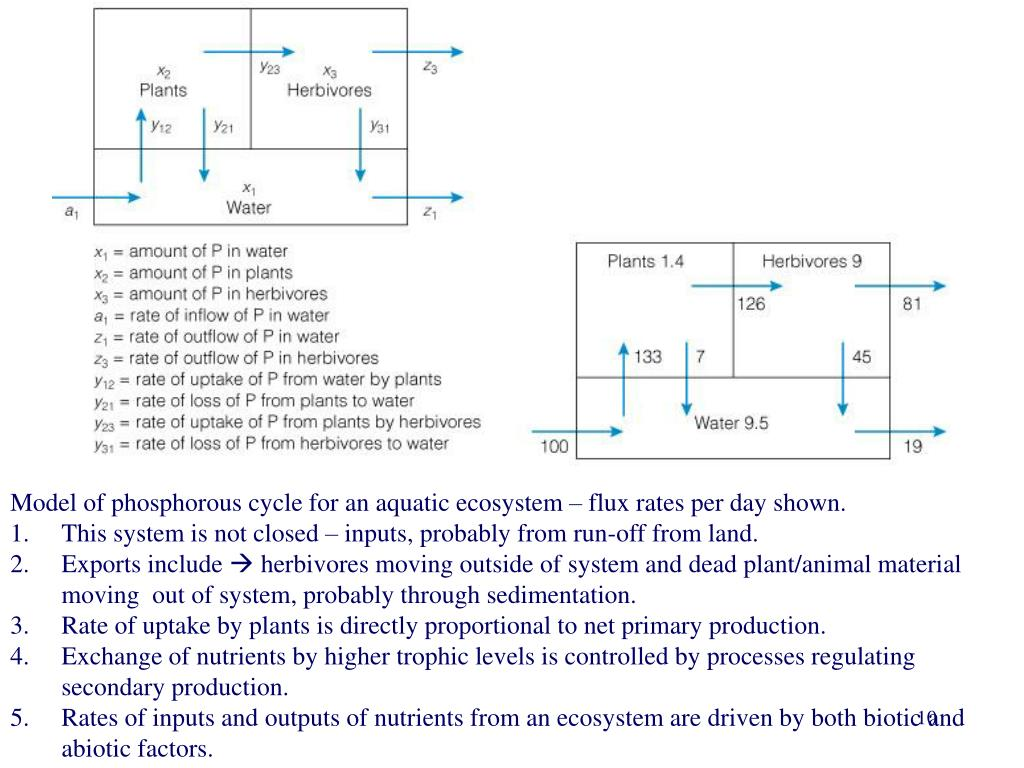 Model of phosphorous cycle for an aquatic ecosystem – flux rates per day shown.
