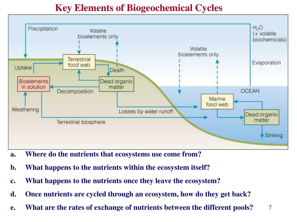 Key Elements of Biogeochemical Cycles