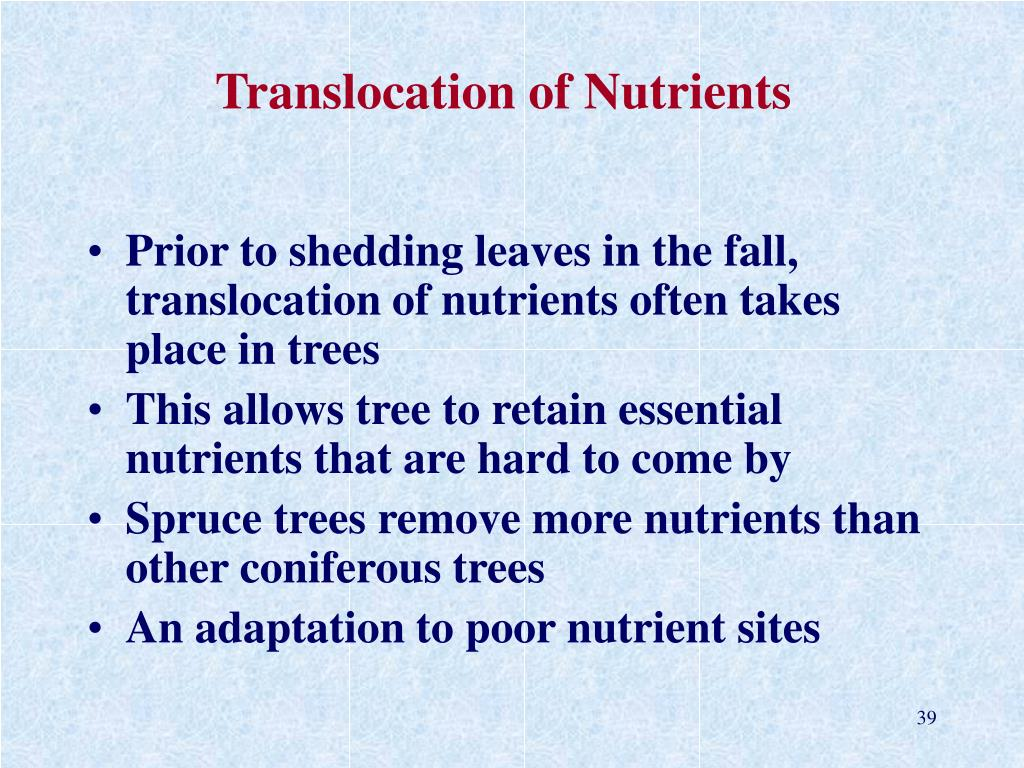 Translocation of Nutrients