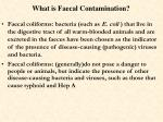 what is faecal contamination