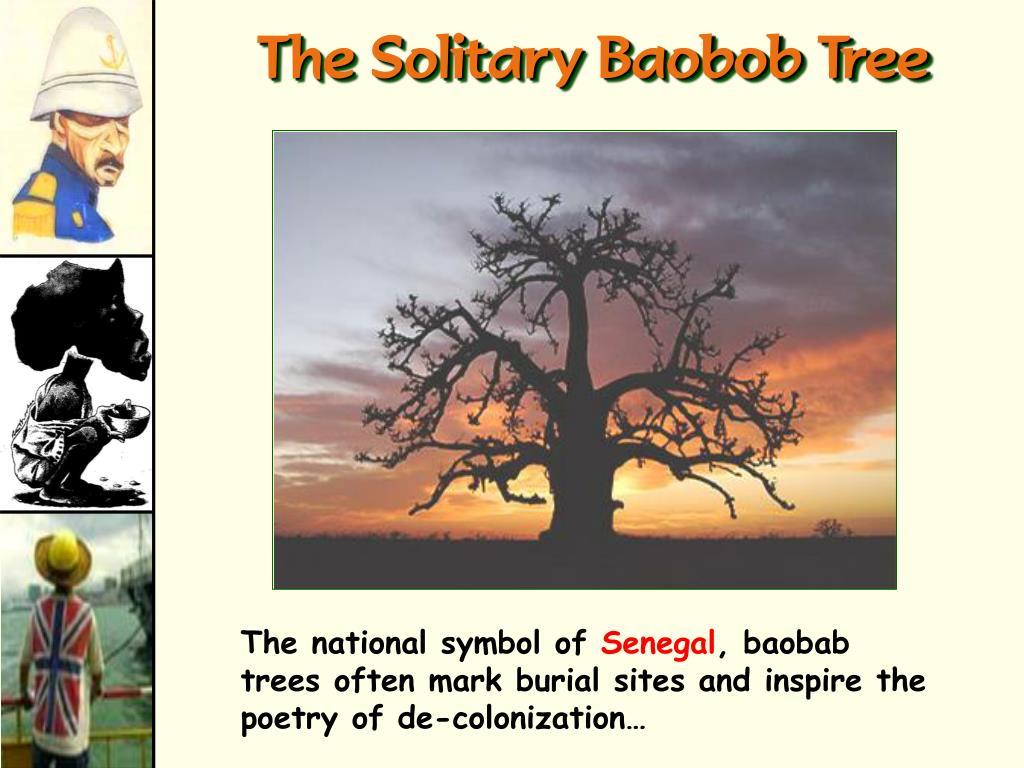 The Solitary Baobob Tree